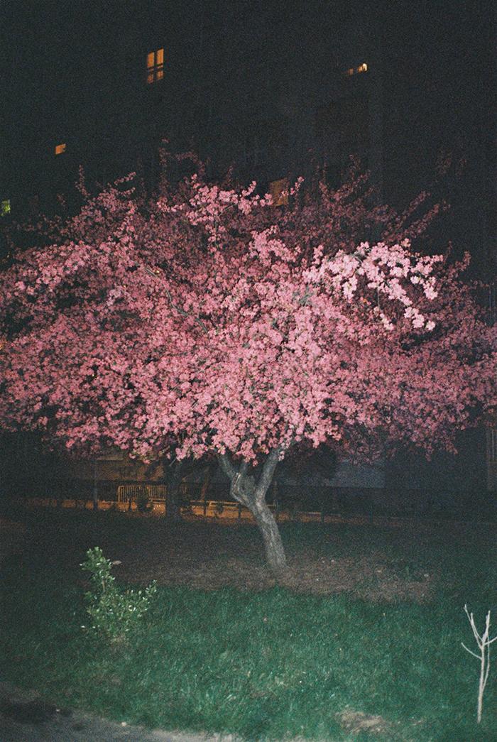 142_cherry