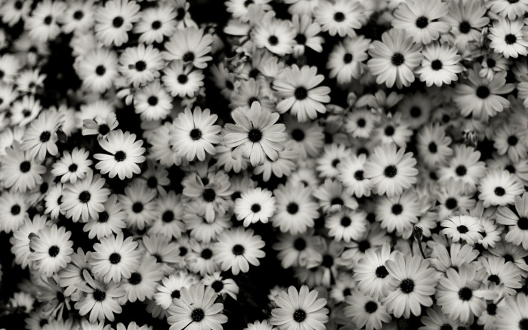 black-white-background-2