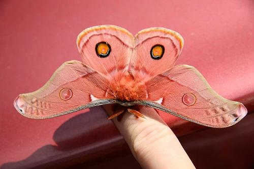 extinci-n-de-los-insectos